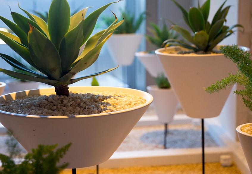 Star Alliance lounge in LAX – indoor garden